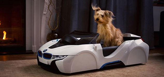 BMW dDriven Dog