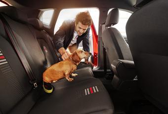 Est-on plus prudent avec un chien dans la voiture ? #1